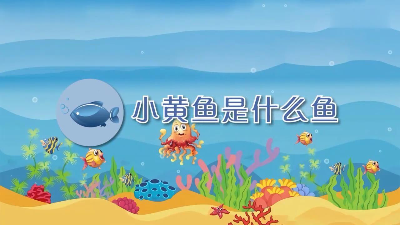 小黄鱼是什么鱼